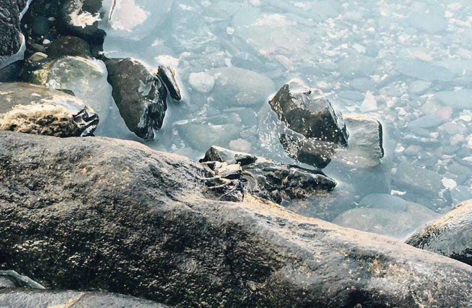 kraby